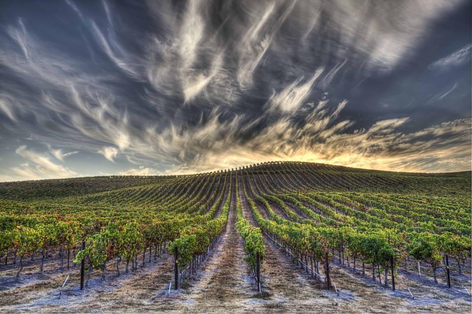 Napa Valley, California, Vineyards at Sunrise, Clouds