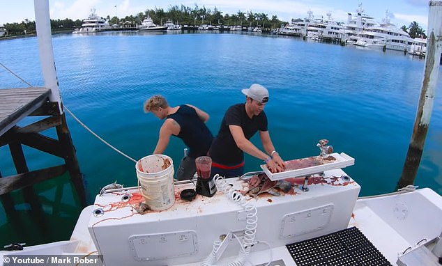 Rober began this journey by traveling on a private jet to Bermuda, where he met a friend who helped him whip up a five gallon smoothie of 20 dead fish. Although human blood was used, the team collected cow blood in order to ensure there was enough for the study