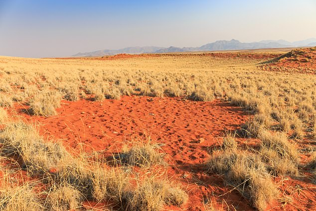 A fairy circle in Namibia, Africa.The mysterious circles scattered throughout the grassy desert have long perplexed scientists