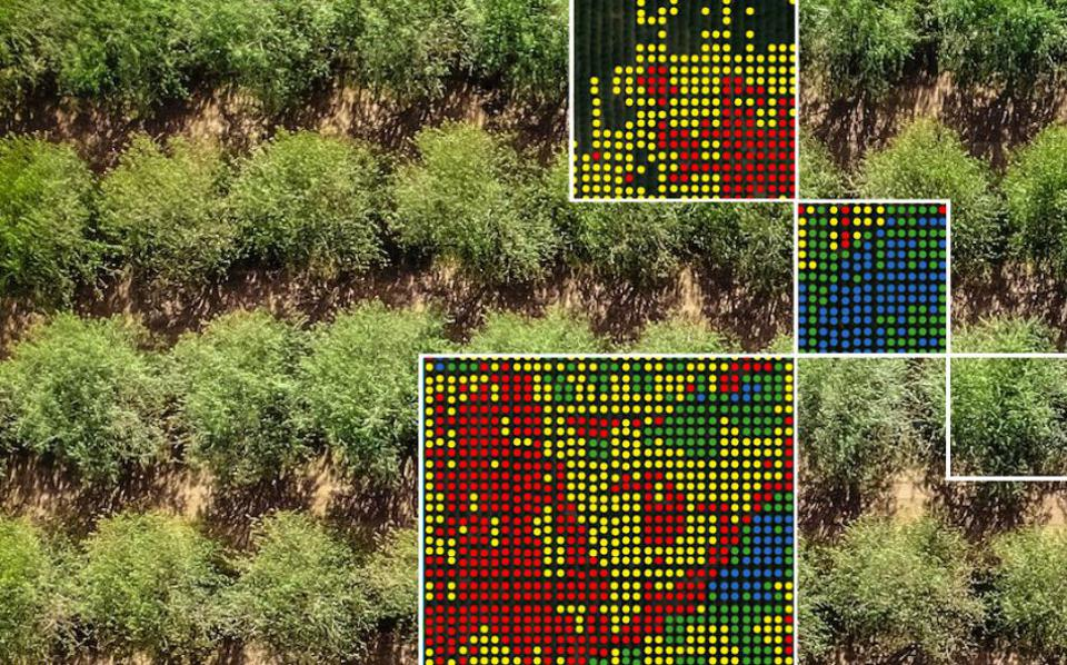 Computer vision in agriculture
