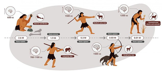The decline of animal food sources toward the end of the stone age, between 80,000 and 40,000 years ago, led humans to eat more vegetables and less meat
