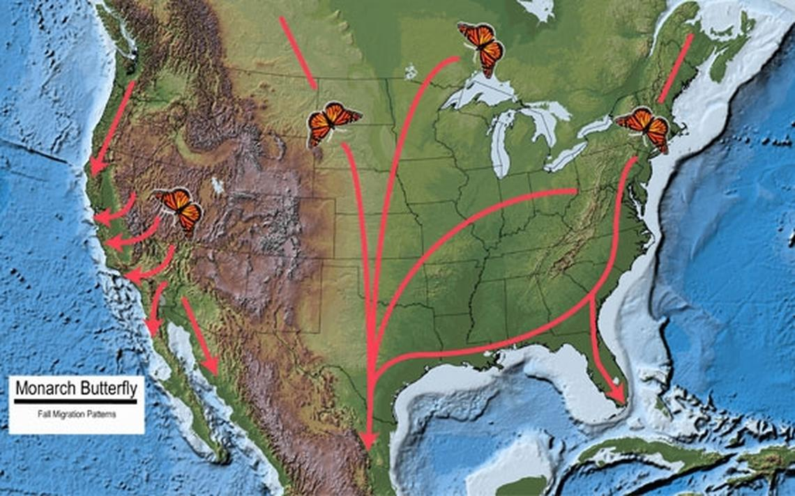 This map shows the fall migration path of millions of monarch butterflies. Image courtesy US Geological Survey