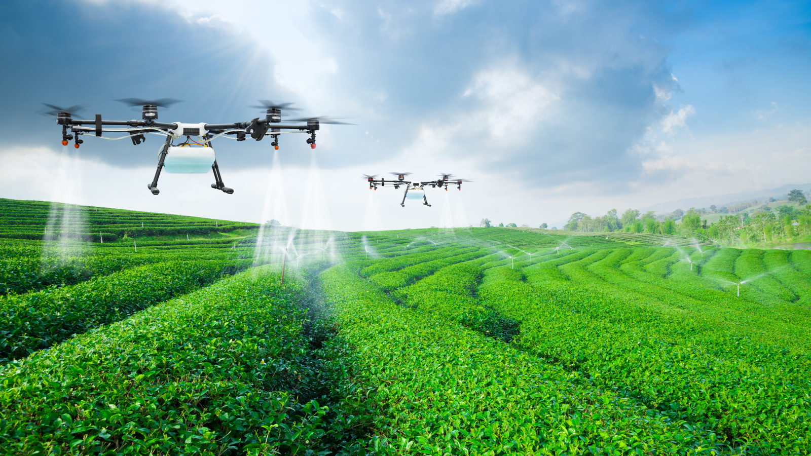 Agriculture drones flying and spraying crops over a field