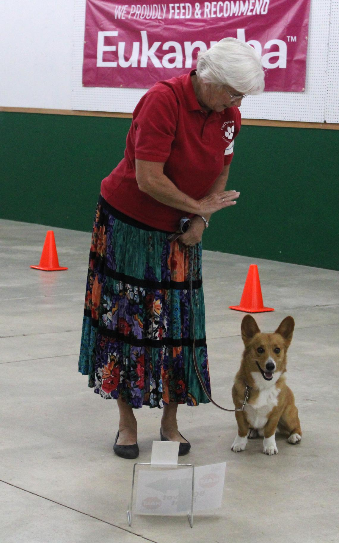Tracy Parthun of Becida competed with her corgi, named Caleb, at the rally obedience portion of the dog show.