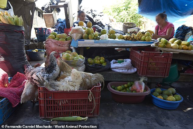 The images and video captured at the market have helped to shine a light on the illegal trade