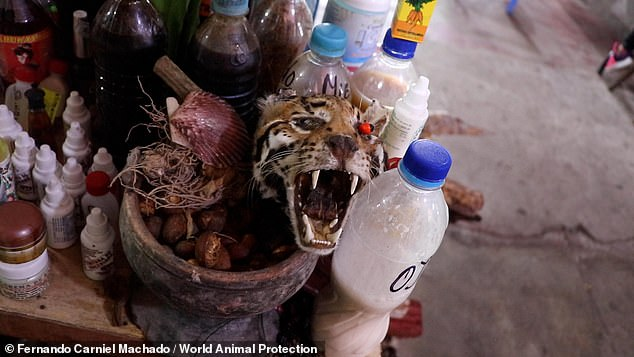 As well as being sold for meat, animals are bought for spiritual, medicinal and decorative use