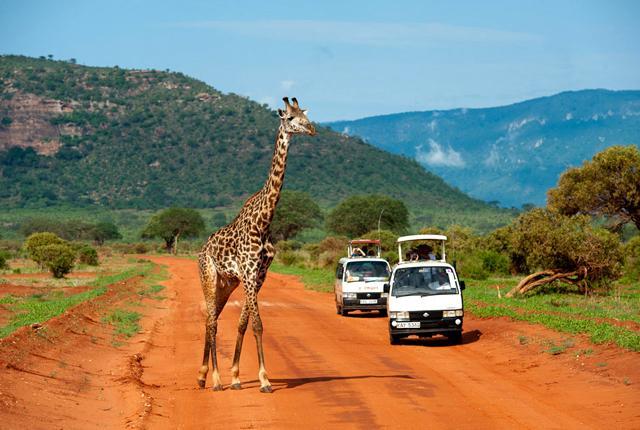 Giraffe in Tsavo East