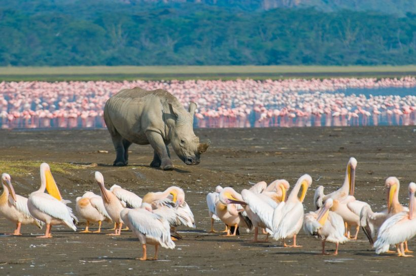 Lake Nakuru Rhino