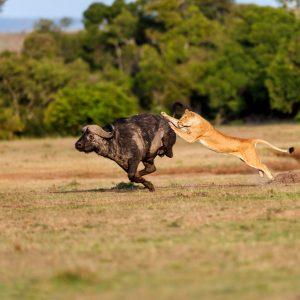 2 days masai mara game reserve