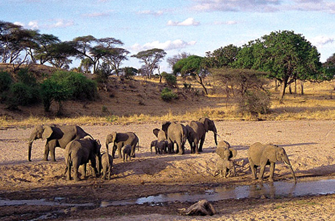 Tsavo West National Park 2