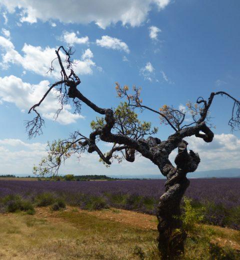 Terre et Bois Les arbres qui m'inspirent