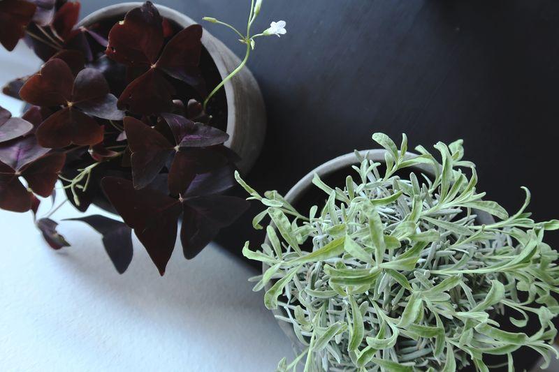 Växter från handelsträdgården Växtkraft i Skåne-Tranås