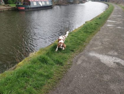 The Pirate Dog on Towpath