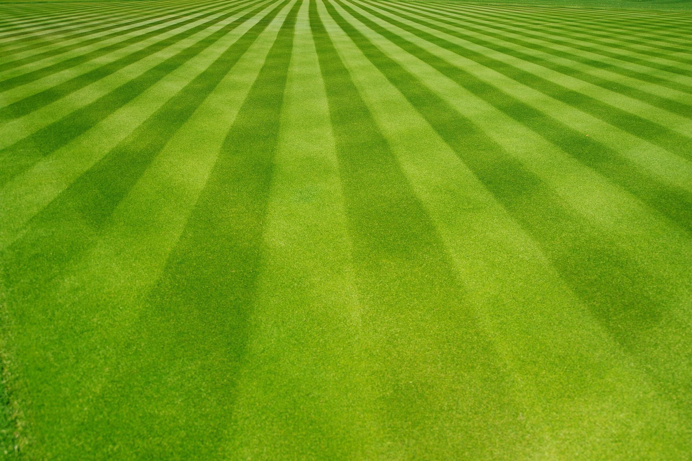 grass/lawn cutting