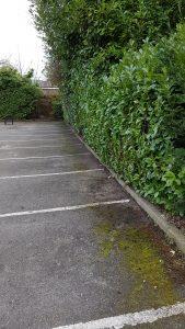 hedge trimming Birmingham
