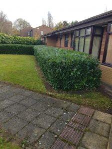 Hedge cutting Solihull