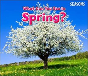 What Can You See in Spring Book