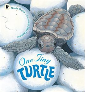 One Tiny Turtle Book