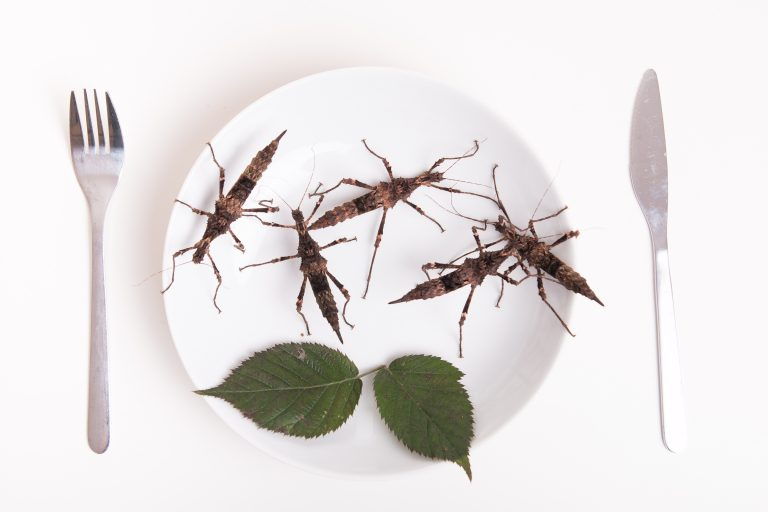 Eating insects could aid weight loss – and bug crisps are now being sold in Sainsbury's