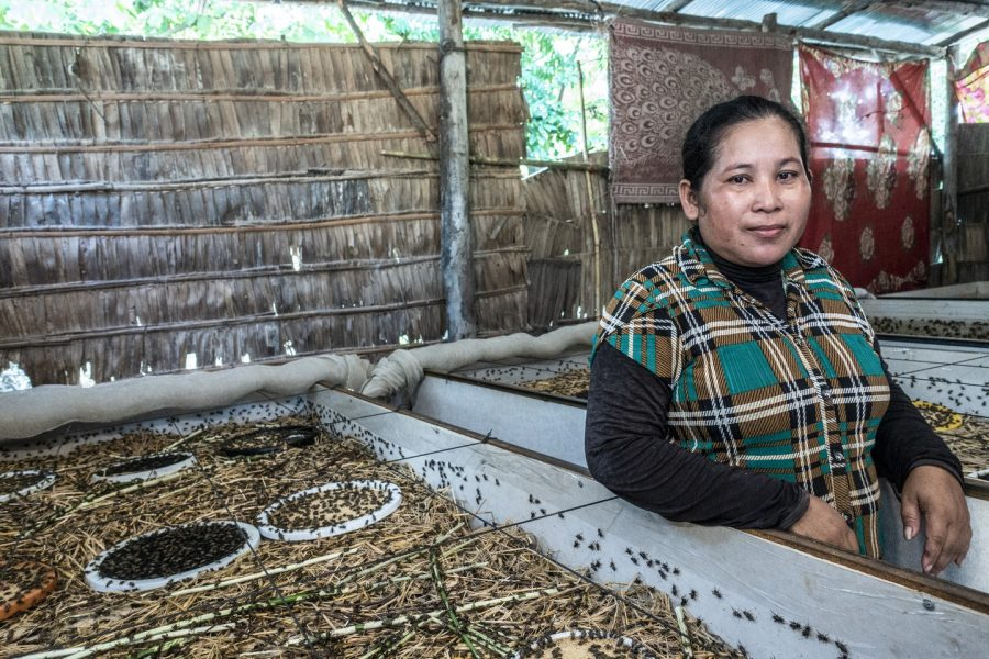 How insect farming is lifting Cambodians out of poverty