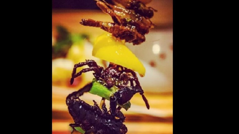 This cafe serves grasshoppers and spiders as meals. That's not all