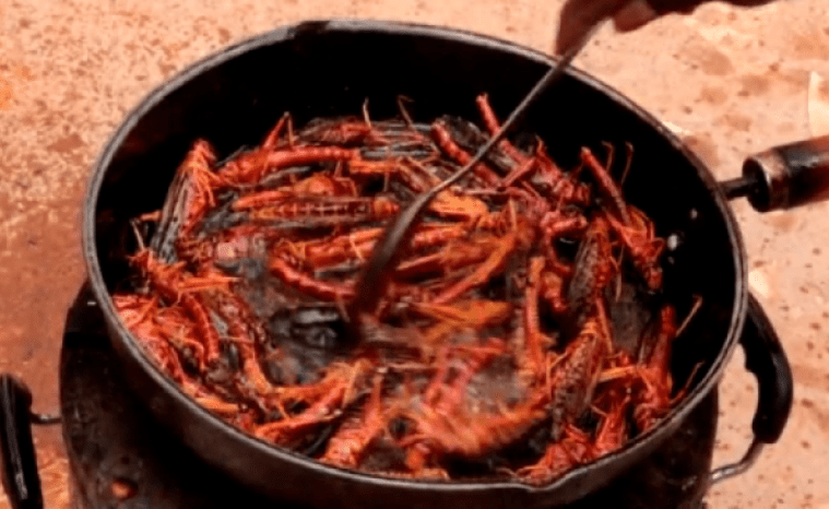 Yukk! :( Somali Farmers Battling Worst Locust Invasion By Eating Insects [VIDEO]