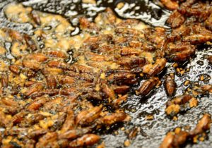 Your online resource for edible insects