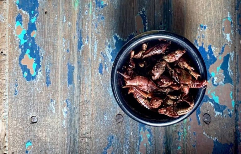You should start eating bugs. Here's how.