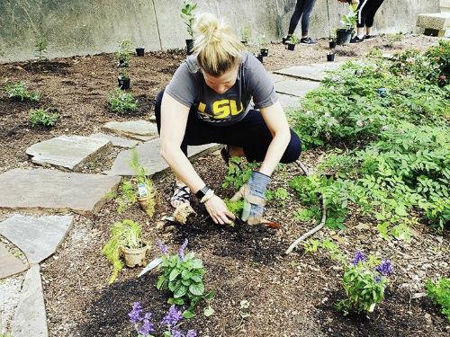 Here's what the LSU Sustainability Fund is going toward this year