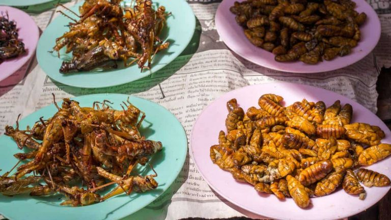 Why eating insects is about to become big business