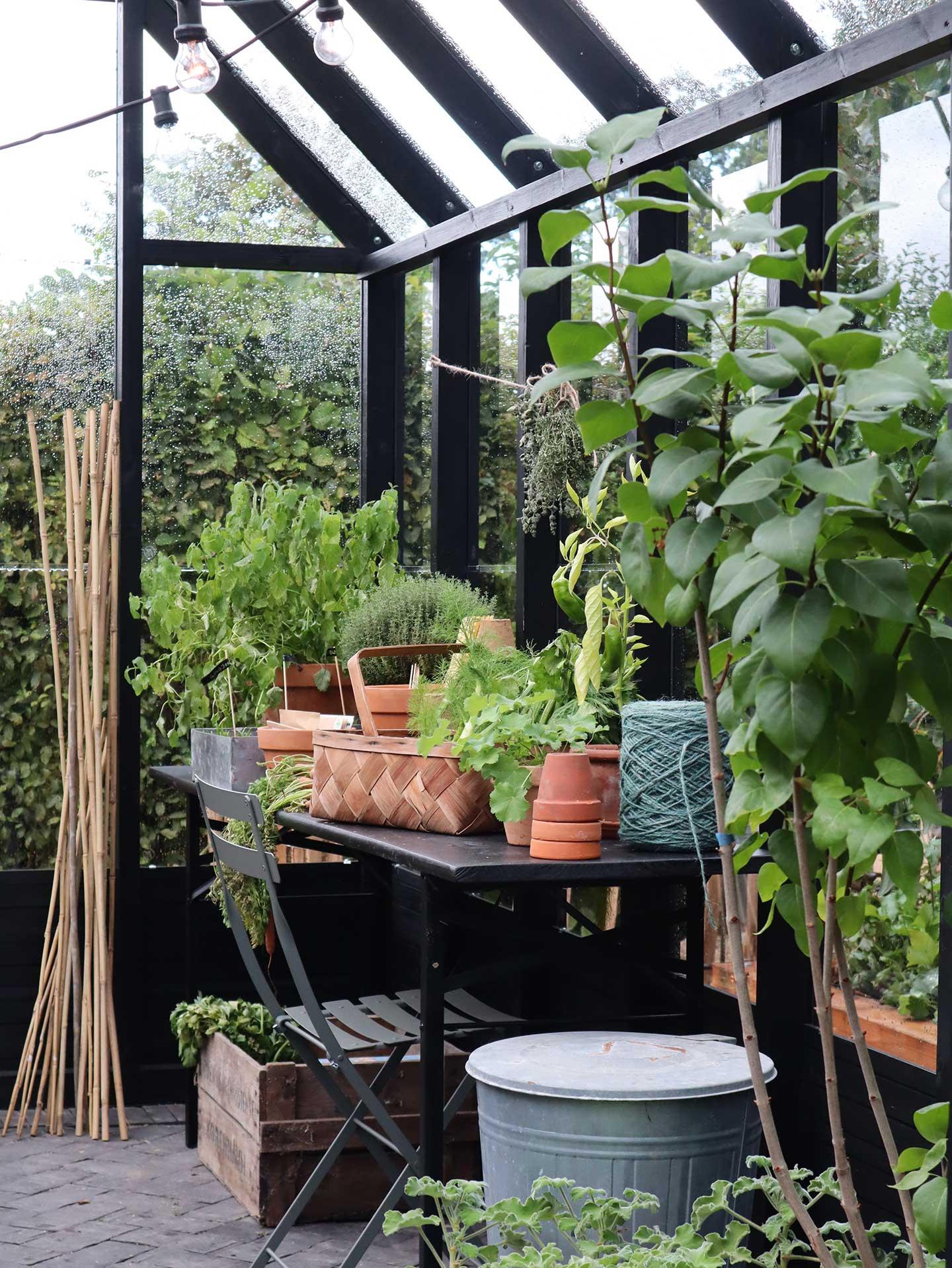Drivhus indefra med lyskæde og plantebord