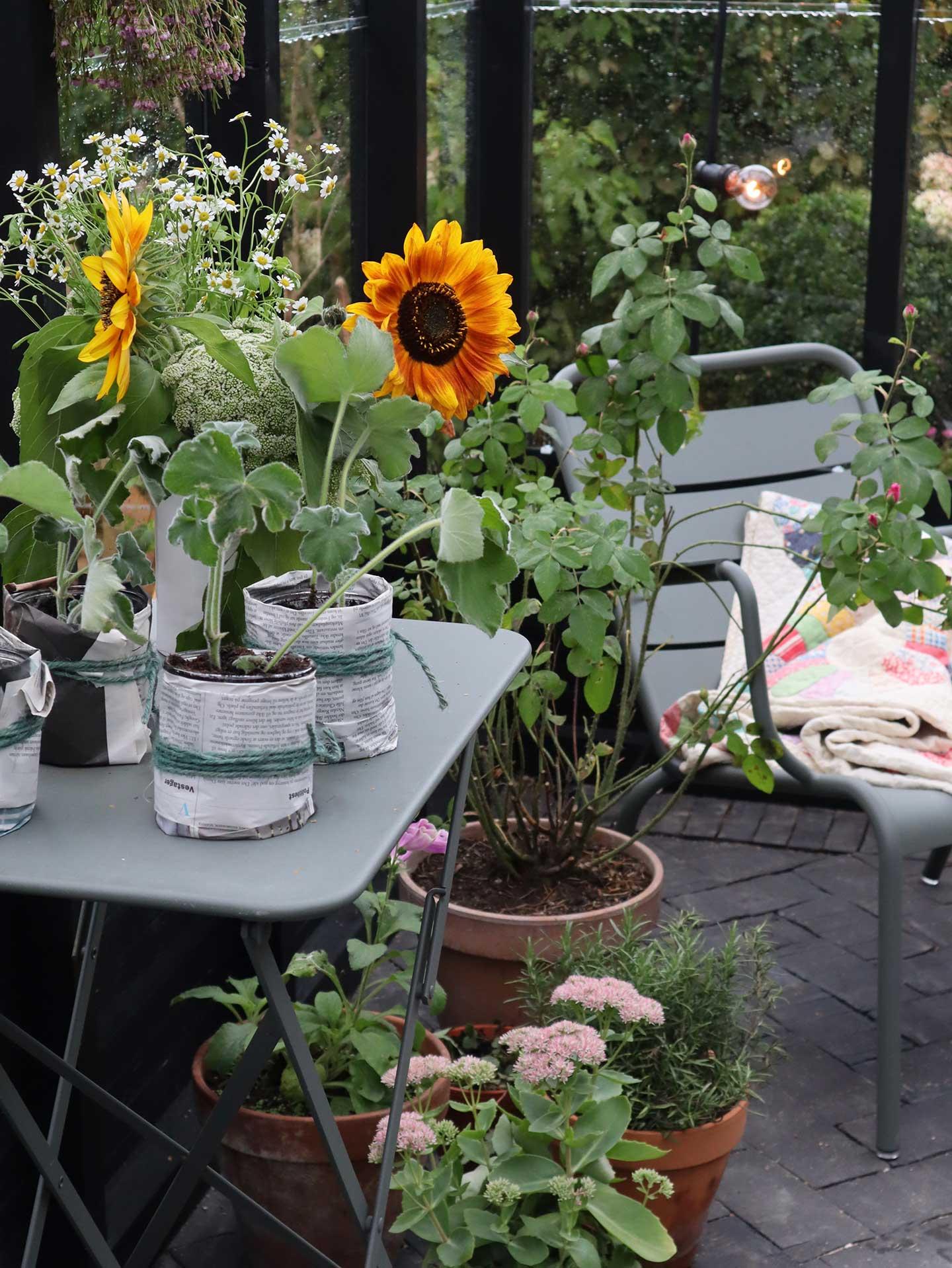 Et drivhus indefra med en stol og et plantebord med solsikker