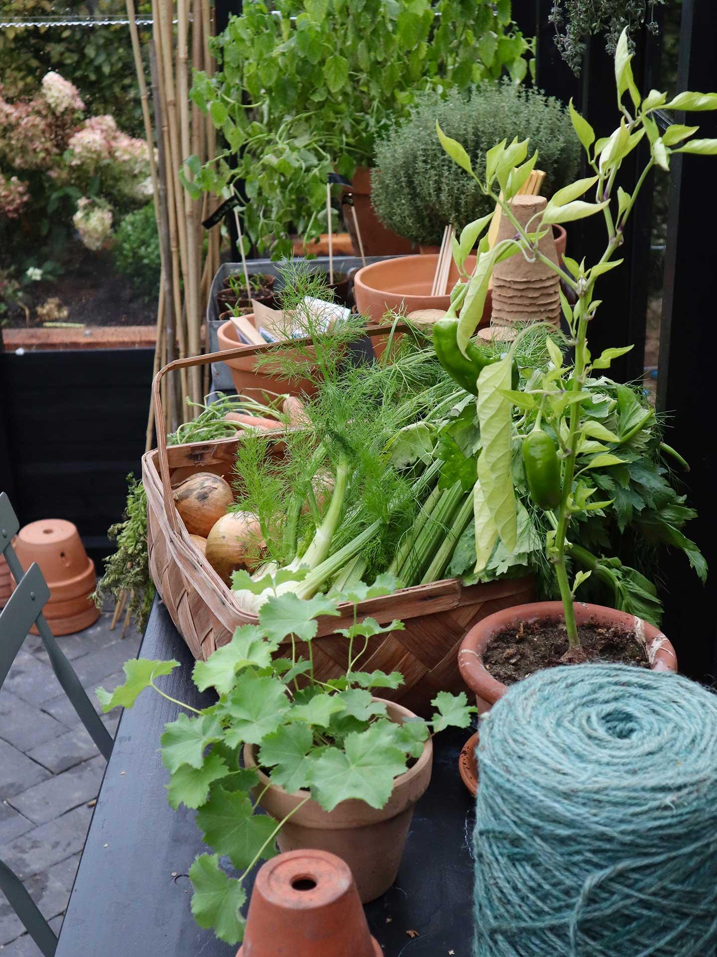 Bord med grøntsagskurv og planter i The Greenery