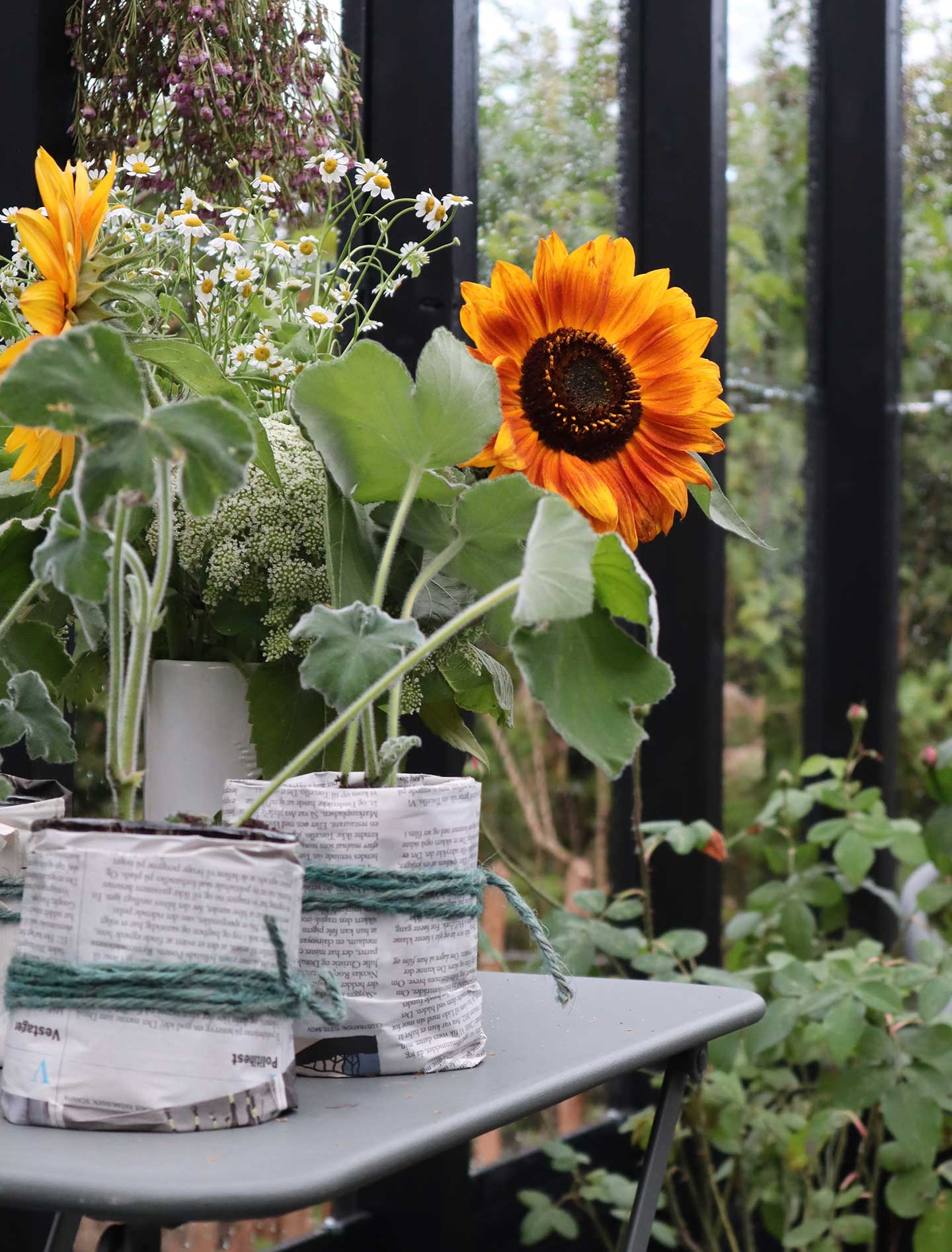 Plantebord med solsikker i sort drivhus
