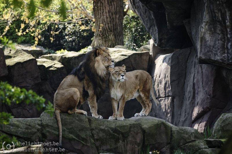2019_04_Zoo_20190407_140230_DxO_PL2_1600px
