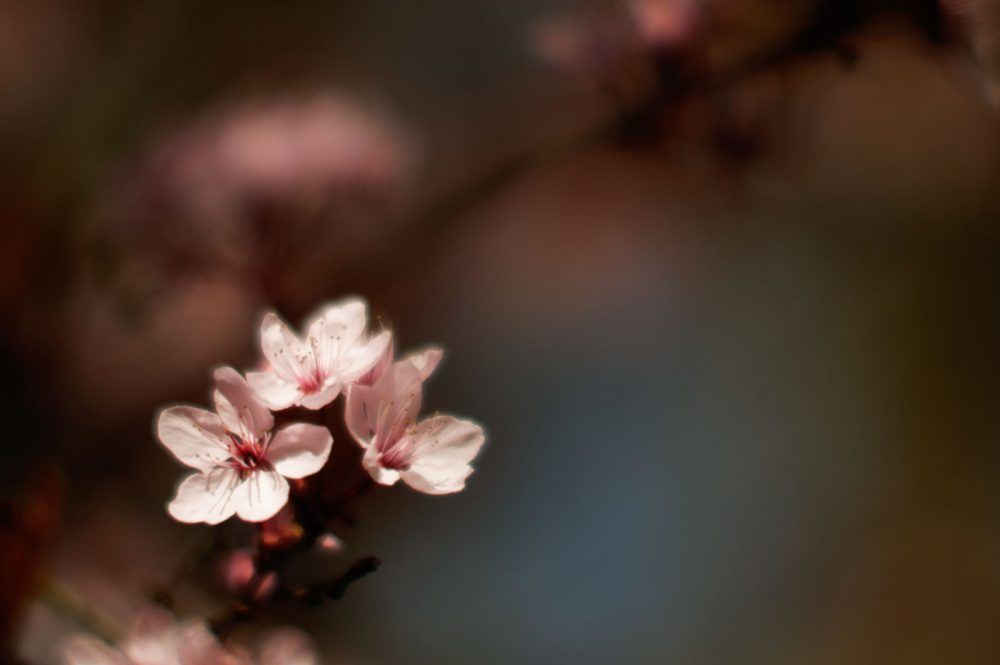 Spring, April 2013