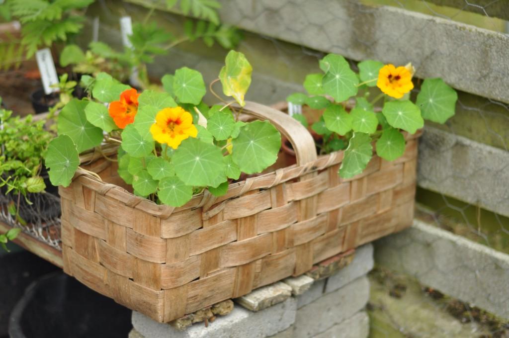 En kurv med blomster