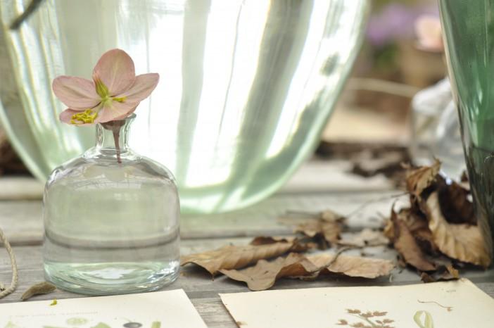 Helleborus i vase