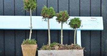 Moskugler formet som træer