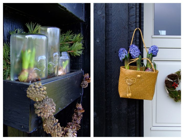 Hyacinter i januar