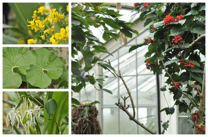 Blomster og planter i Palmehuset Botanisk have København