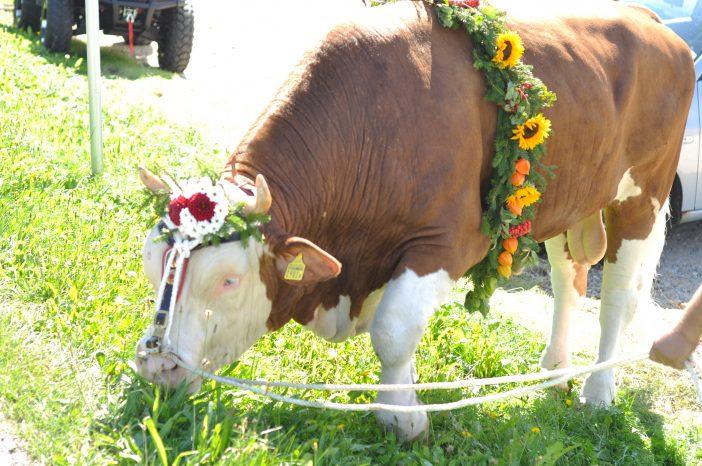 En præmietyr pyntet med blomster