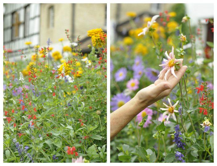 Vild og frodig have i Schweiz