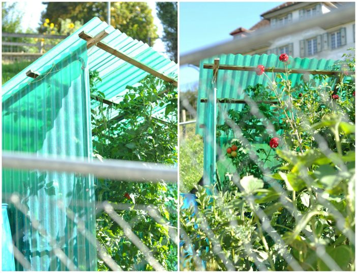 Minidrivhus til tomater med tag og tre sider af pvc tagplader