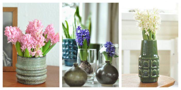 Hyacinter i tre forskellige arrangementer