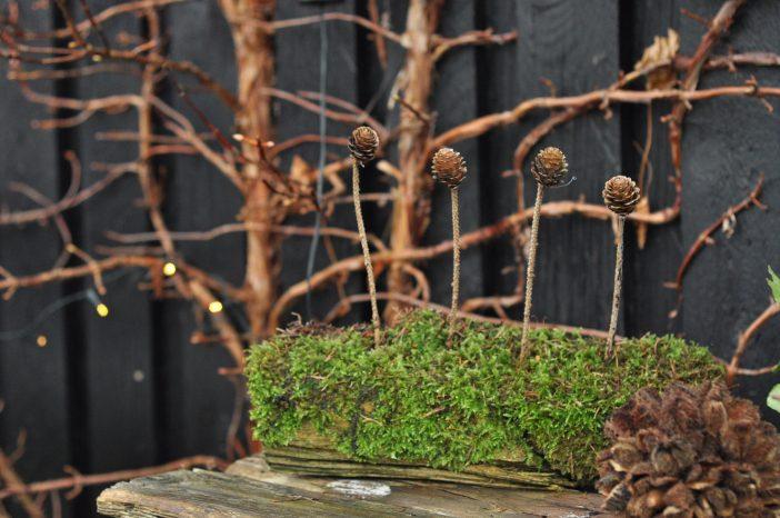 Et stykke træ med mos og kogler på pind