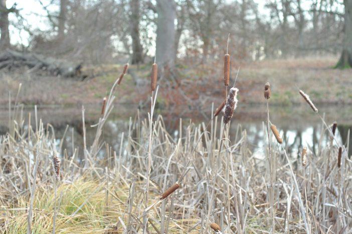 Lekkende dyrehave - skovsø med dunhammer