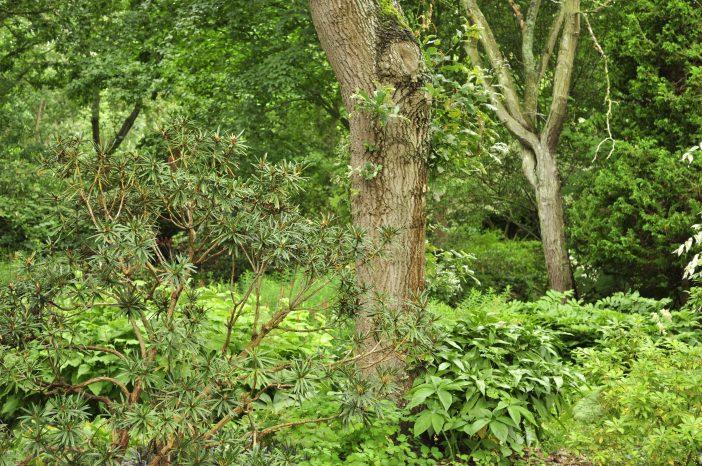 Grønt i Peter Hansens have