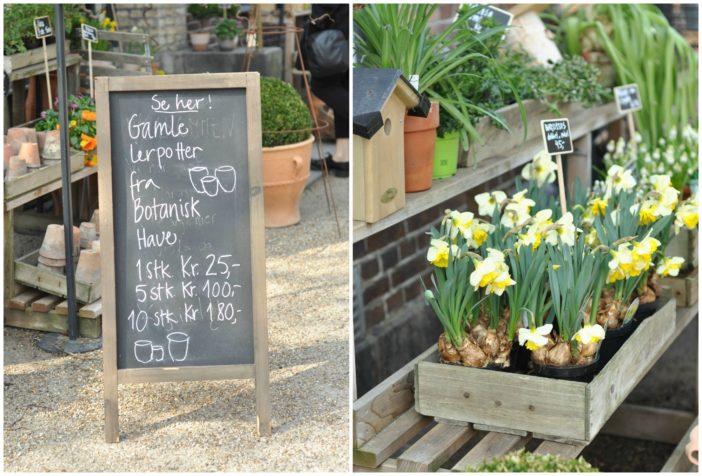 Botanisk haves butik