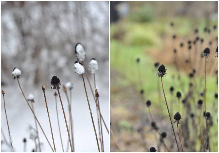 Solhats frøstande i vinter- og efterårsvejr